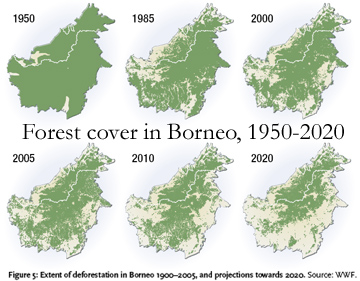 Borneo Forest Cover