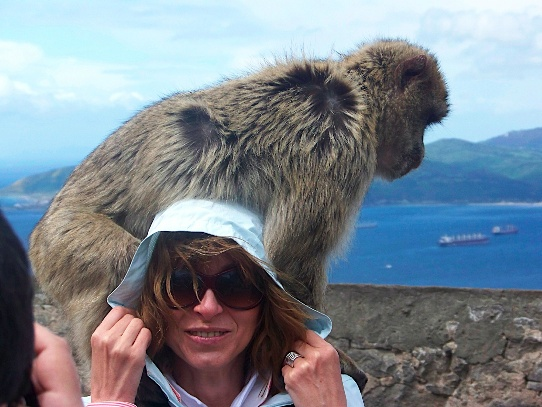 Barbary ape with tourist
