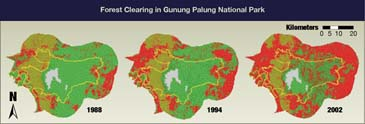 Gunung Palung forest change