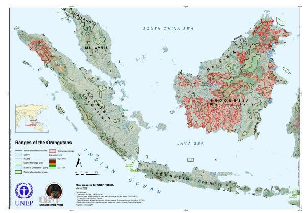 map of orangutan distribution